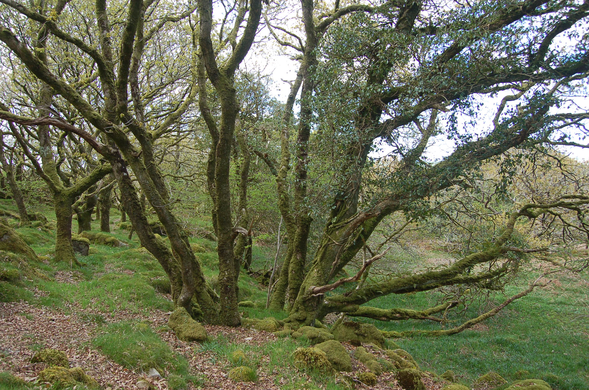 Ty Canol Coppice Stool